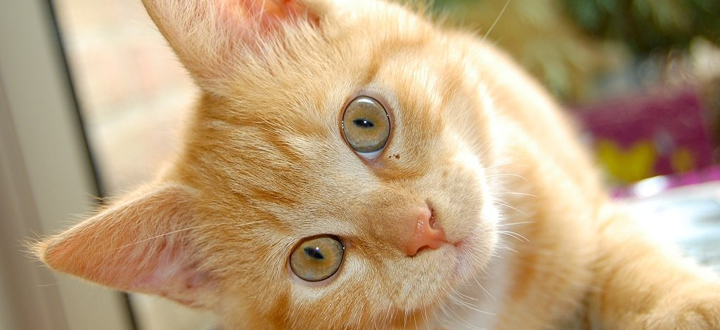 Los Gatos y sus orígenes