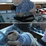 El gato capitán