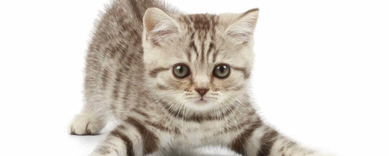 Consejos para cuidar un gato
