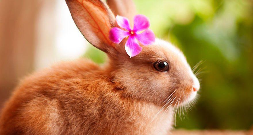 Conejo, una historia del conejo común
