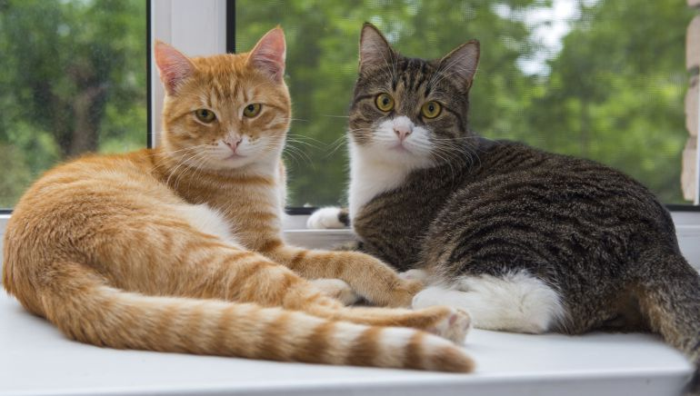 Como mejorar el bienestar del gato en 10 pasos