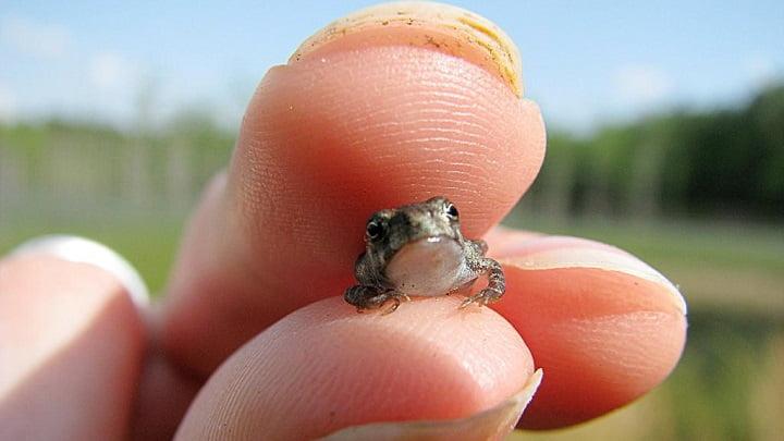 Algunos de los animales más pequeños del mundo