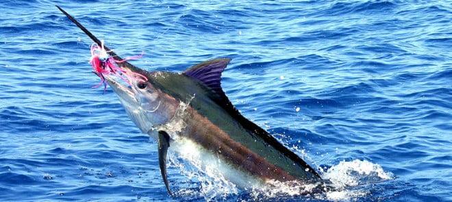 El pez espada